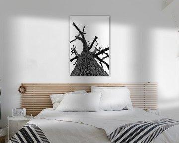 Kahle Eiche in Schwarz und Weiß von Sean Vos
