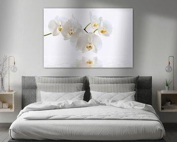 Orchidée sur Violetta Honkisz