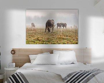 Tauros-Rinder an einem nebligen Morgen von Ronenvief