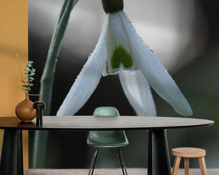 Beispiel fototapete: Tau Schneeglöckchen von Astrid Brouwers