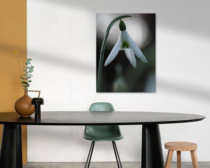 Beispiel: Tau Schneeglöckchen von Astrid Brouwers