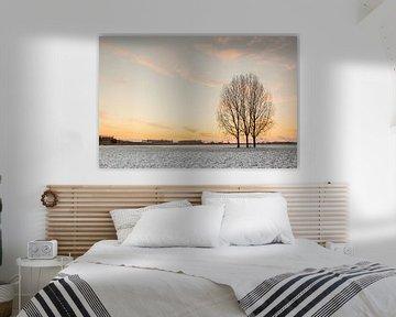 Drei Bäume auf dem Feld von Marcel Derweduwen