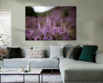 Auf dem lila Heidekraut von Voorbeeld Fotografie