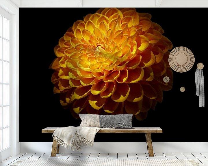 Beispiel fototapete: Orange Blume von Johannes Schotanus
