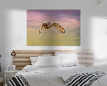 Een Euraziatische oehoe of oehoe. Vliegt met uitgespreide vleugels tegen een dramatische hemel. Rode van Gea Veenstra