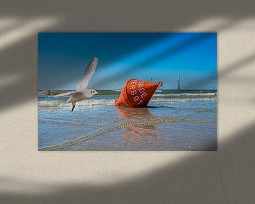 Zeemeeuw met waterboei op de Noordzee van Animaflora PicsStock