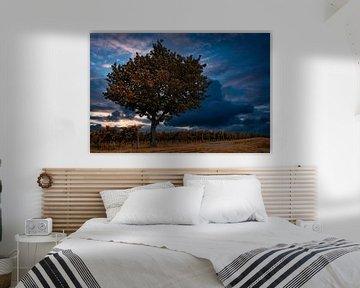 Wijngaarden met boom van Norman Krauß