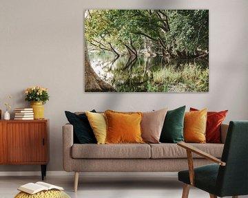 Bäume Reflexion im See - Sri Lanka Reisefotografie drucken von Freya Broos