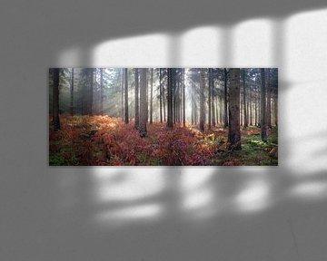 Ochtendgloren in de herfst von Paul Pijpers