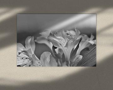 Blumenstrauß von Hannelore