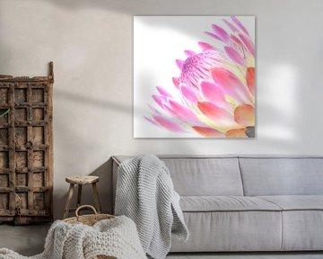 Nahaufnahme schöne rosa Blume von Hannelore