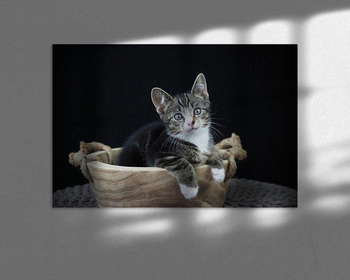 Beispiel: Kitten in einem Holztrog von Astrid Brouwers