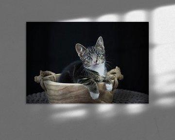 Kitten in een houten trog