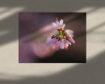 Eine Fliege auf der blühenden Heide von Astrid Brouwers