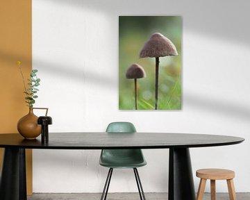 Pilze in einem Grasfeld
