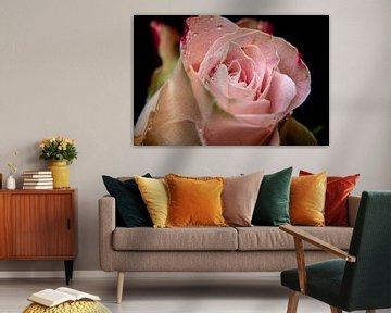 Roze roos! van Ronald van Kooten