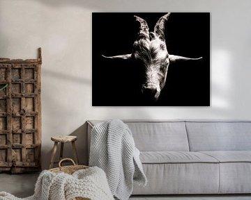 Dierenportret van een geit in zwart-wit van Jan Hermsen