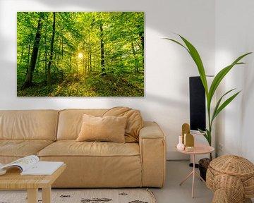 Bos met beuken tegen de achtergrond verlicht door zonnestralen van Dieter Walther