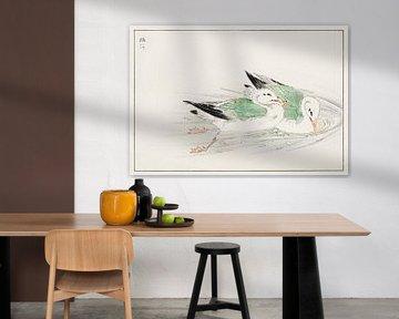 Meeuw illustratie door Numata Kashu van Studio POPPY