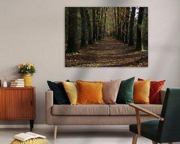 Herbst im Wald von Jose Lok