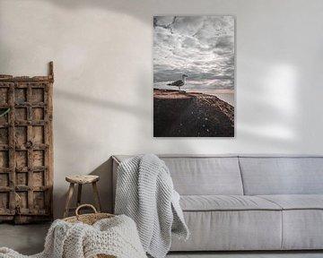 Seemöwe an der Nordsee von Kyra de Putter