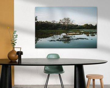 Reflectie boom in meer - Sri Lanka reisfotografie print van Freya Broos
