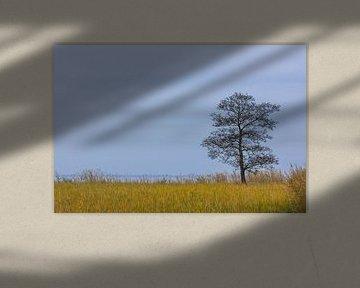 Rietlandschap met boom. von Johan Kalthof