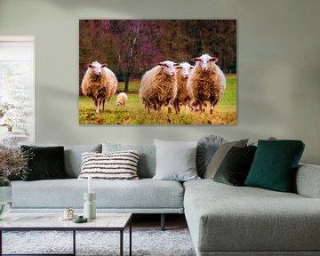 Spaziergang entlang der Schafe.