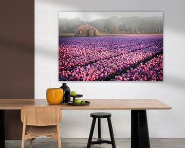 Tulpen in ochtend mist van Dirk-Jan Steehouwer