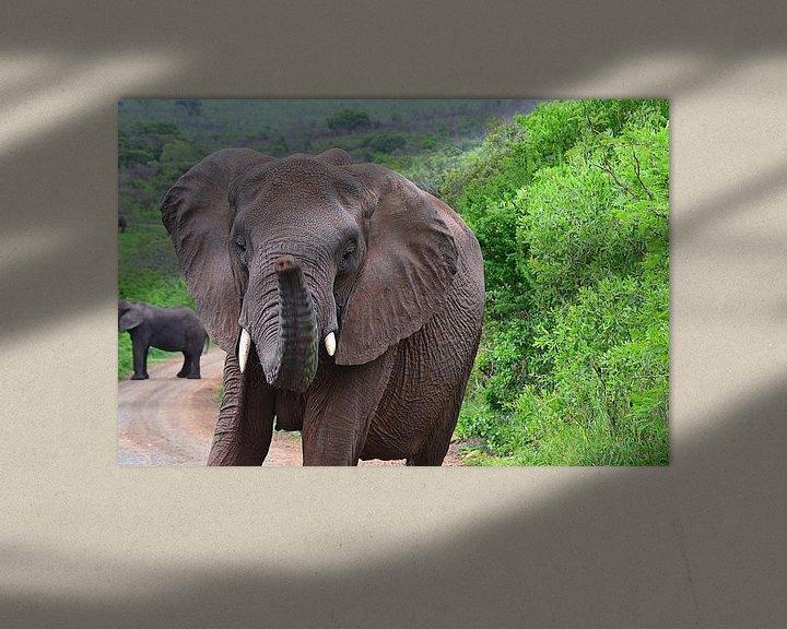 Beispiel: Elefant im Hluhluwe-Imfolozi-Wildreservat von JTravel