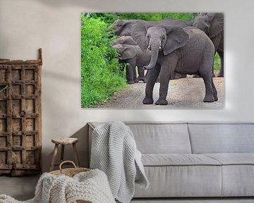 Olifanten in Hluhluwe-Imfolozi Game Reserve