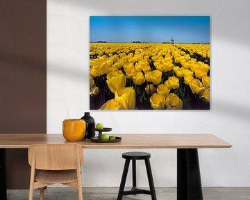 Gele tulpen met molen 2 van Rene van der Meer