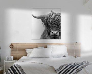 Portret Schotse Hooglander zwart-wit van Ans Bastiaanssen