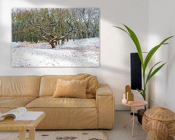 prachtige boom in de sneeuw van Merijn Loch