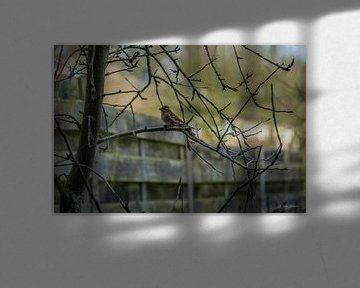 mus in de achtertuin van Andre Klooster