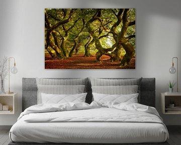 Tanzende Bäume | Dansende Bomen von Dieter Ludorf