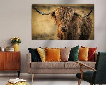 Schotse Hooglander (Waddie) van Mark van der Walle