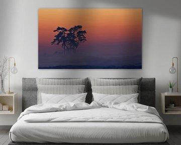 Veluwe-Sonnenuntergang von Marcel van Balkom