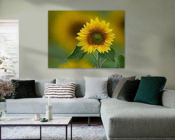 Sonnenblume zum Quadrat von Marcel van Balkom