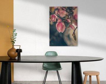 Magnolia bloesem van tim eshuis