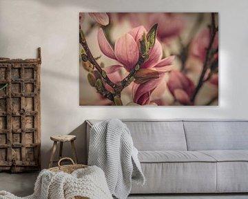 Magnolia in bloei van tim eshuis