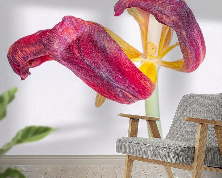 Sfeerimpressie behang: Kreukelige tulp 1. van Pieter van Roijen