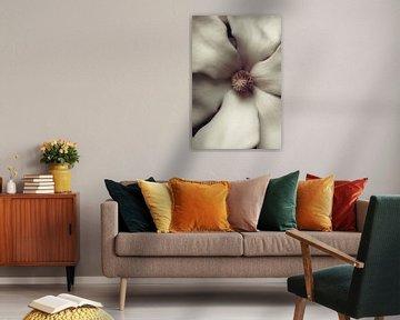 Magnolia in close-up van tim eshuis