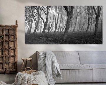 Bomen in mist III van Thijs Friederich