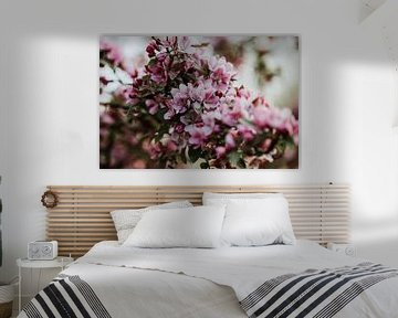 Close-up roze bloesem | Arnhem, Holland van Trix Leeflang