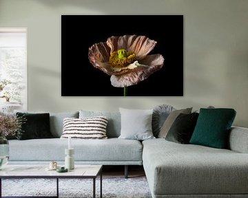 Bunte Blume mit schwarzem Hintergrund Landschaft