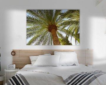 Palme auf Gran Canaria von Guido van Veen