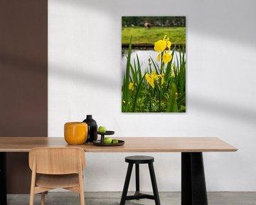 Gele lis (Iris pseudacorus) van Marly De Kok