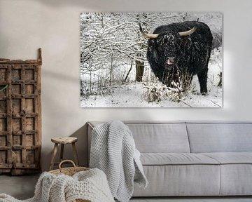 Galloway in de sneeuw van Marcel Derweduwen