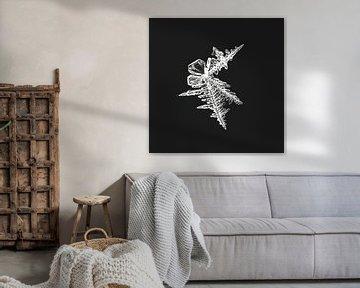 ijs-art-ijskristallen II van Klaartje Majoor
